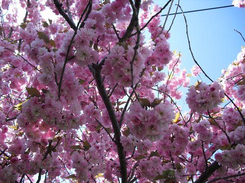 Spring 2010 025