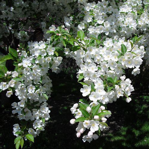 Spring 2010 018